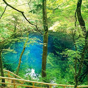 十二湖の森